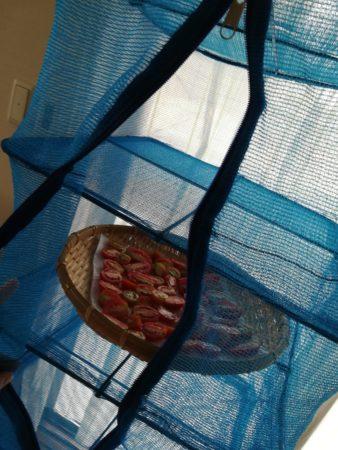 トマトをネットに