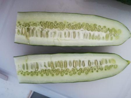 きゅうりの種