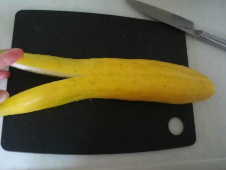 黄色いきゅうり