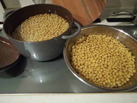 膨らんだ大豆